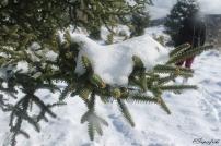 arbol-nieve