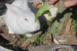 conejo comiendo