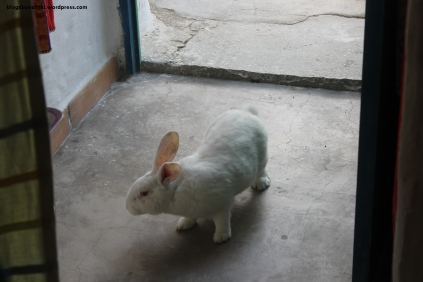 conejo entrada